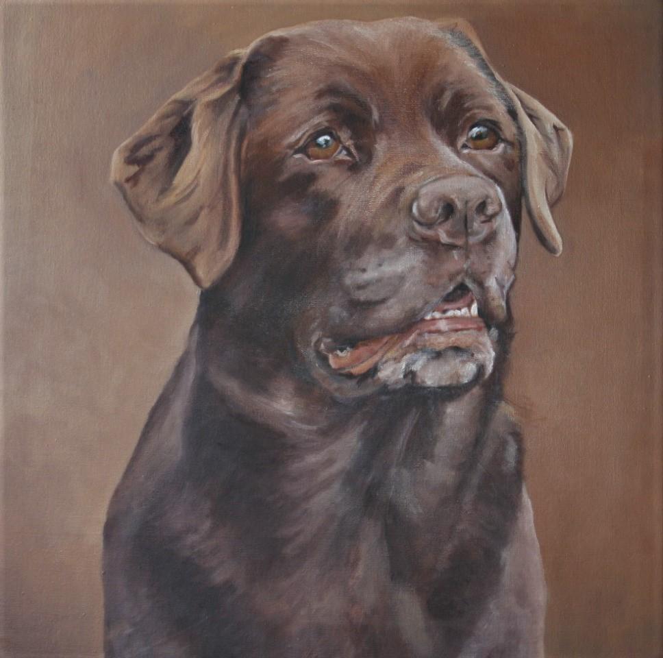 Hunde Portraits